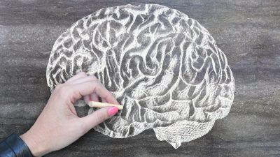 Comment la PCNO renforce la communauté mondiale de recherche sur le cerveau